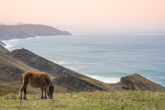 horse grazing in the basque coast, basque country