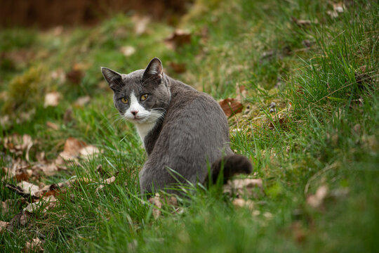 Domestic cat in nature background looking back