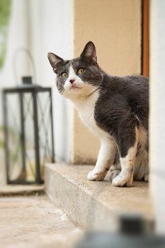 Cat sits in front of the front door