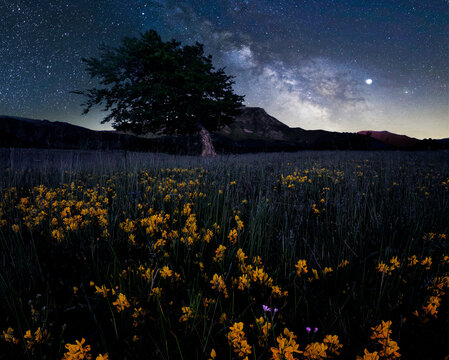 Milky Way at Prati di Sara with yellow flowers in the foreground and bent tree and mountain in the background, Emilia Romagna, Italy