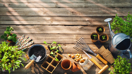 Wall Murals Wall Decor With Your Own Photos Gardening tools and seedlings on wooden table in greenhouse