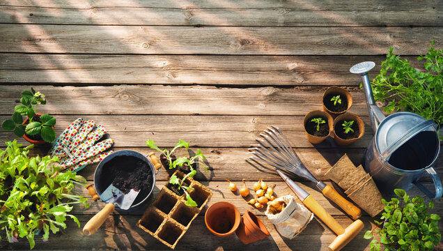 Gardening tools and seedlings on wooden table in greenhouse