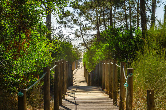 Wooden footbridge leading to the beach across the dunes in protected area