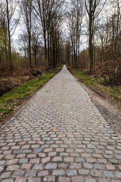 Forêt de Stambruges - chemin en forêt ( commune de Beloeil - Belgique )