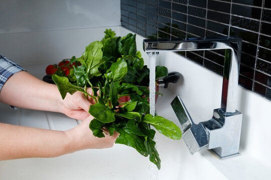 Cropped shut of adult woman's hands washing the juicy green leaves of spinach by the kitchen sink. Copy space for text, close up, background.