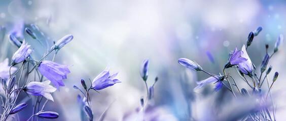Fototapeta Lilac bellflowers on a blurred purple blue background obraz