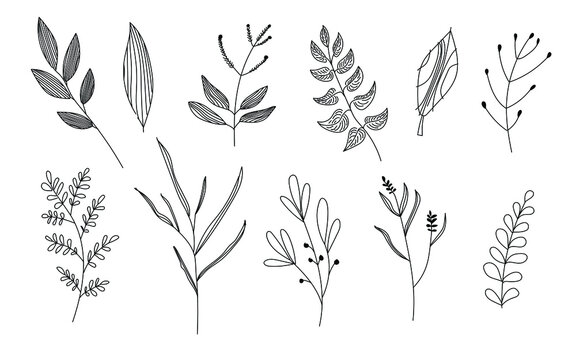 Vector set graphic set of plants in doodle style