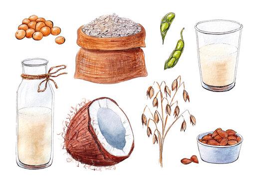 Hand drawn watercolor vegetable milk with ingredients set