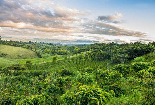 Cafetal y atardecer, eje cafetero, finca de café, cultivo de café, paisaje cafetero, café en las montañas, café colombiano, cafetal en Colombia