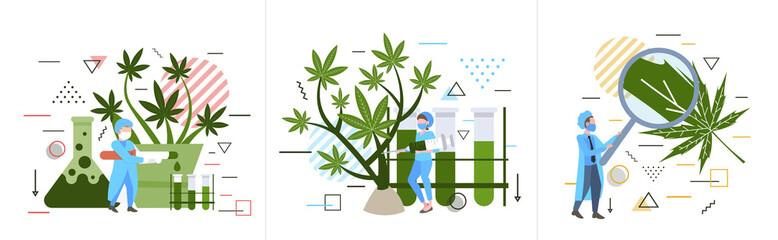 Fototapeta set researchers checking analyzing examining marijuana plant healthcare pharmacy medical cannabis concept horizontal full length