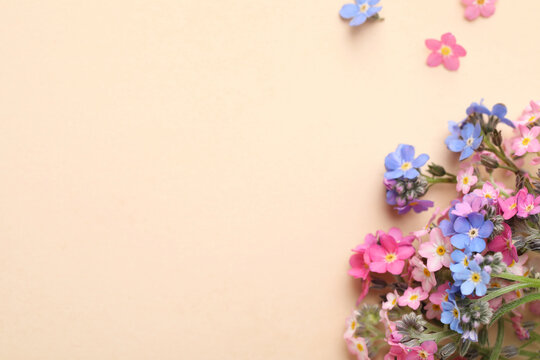 Beautiful Forget-me-not flowers on beige background, flat lay. Space for text