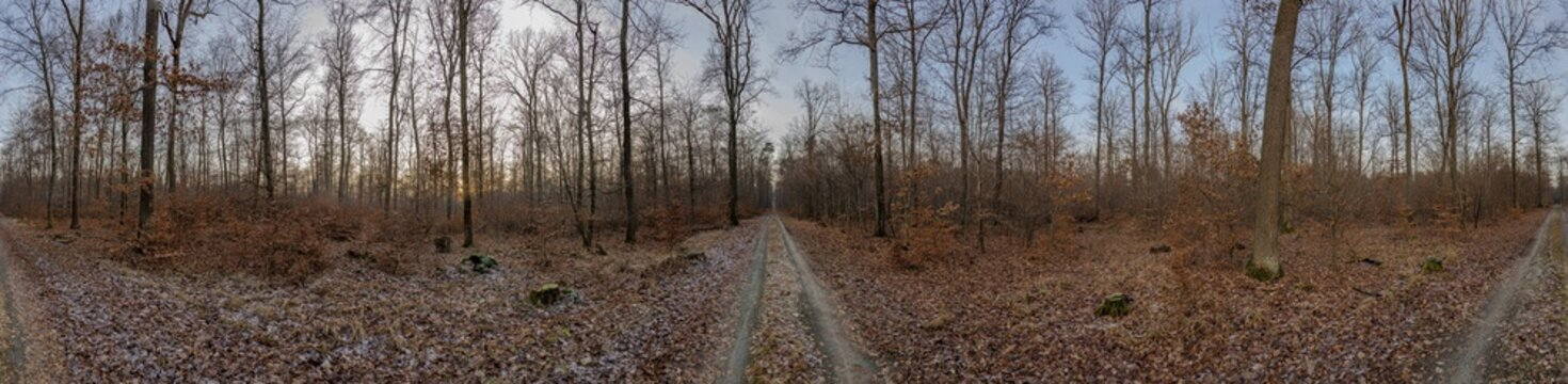 Panoramic image of a forest with paths branching off from the central point of the photo in different directions