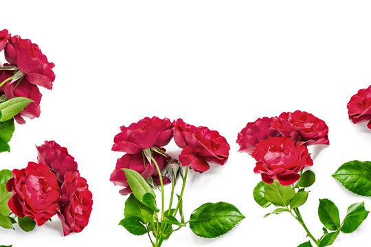 Rose flowers on a white background. floral composition.