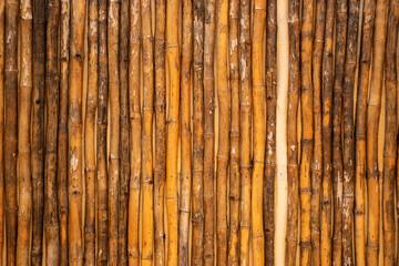 cerca de cañas de bambu secas, formando patron lineal vertical.