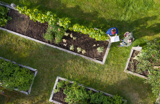View from above couple tending to raised bed vegetable garden