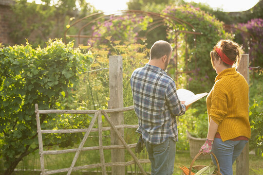 Couple with book harvesting vegetables in sunny idyllic summer garden