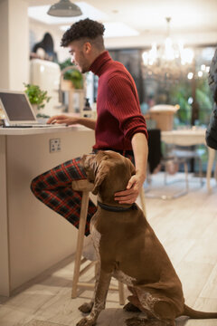 Young man petting dog while working from home at laptop in kitchen