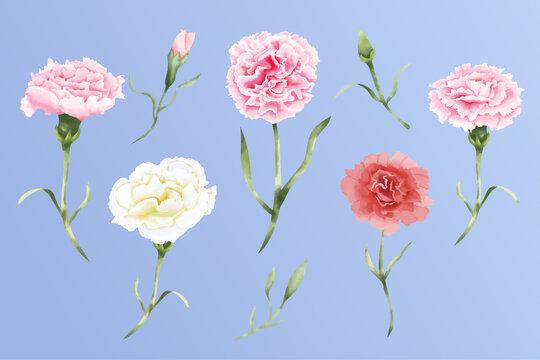 Watercolor carnation flowers set