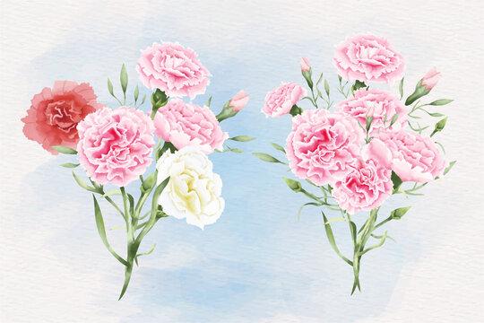 Watercolor carnation flowers illustration