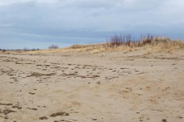 Plaża i trawy na Wyspie Sobieszewskiej
