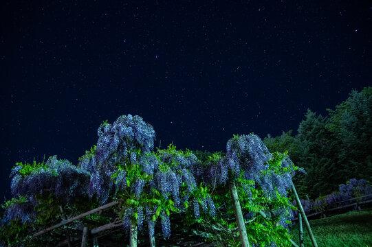 遠軽町まるせっぷ藤園の藤棚と星空
