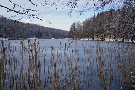 Burgbacher Waldweiher im Winter