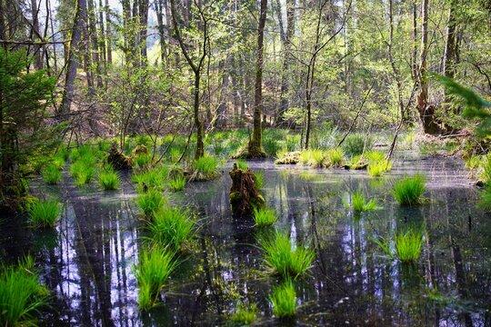 Moorlandschaft im Lambsbachtal bei Homburg, Saarland