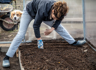 Fototapeta The girl sows seeds in the ground