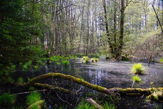 Auwald im Lambsbachtal bei Homburg Saar