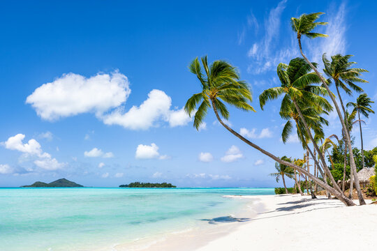Tropical beach with palm trees and turquoise water