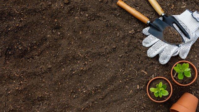 Plants gardening tools close up
