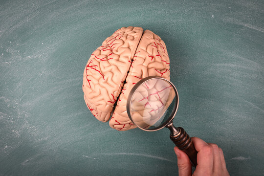 Science, Medicine and Research concept. Brain model and a woman's hand with a magnifying glass on a green chalk board