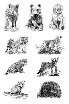 Set of nine baby animals