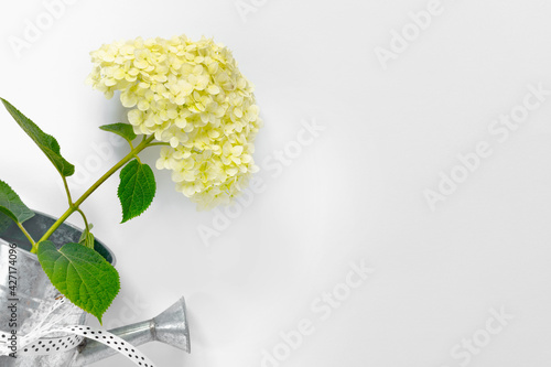 Greeting card with white tender hydrangea for mother's day.