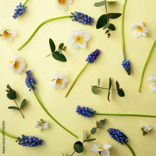 Spring flowers square background. Fresh muscari and wild flowers on pastel yellow baner. Happy mother's day. Flat lay, copy space