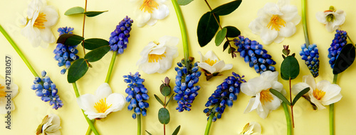Spring flower composition, banner. Fresh muscari and wild flowers on pastel yellow baner. Happy mother's day. Flat lay, copy space