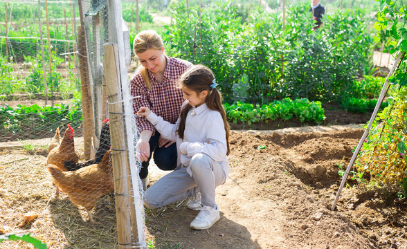 Little american girl with her mom feeding hen in a chicken pen on an organic farm on a warm spring day