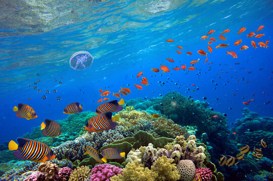 Tropical fish and hard corals on a blue water
