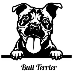 Bull Terrier Peeking Dog - head isolated on white