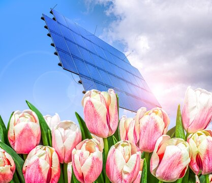 tulips against sky and solar panels, renewable energy