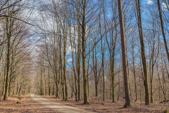 A beaten trail through bare woods in Skrylle on a winter sunny day. Pathway or beaten track in a sleeping forest among leafless trees conveys tranquillity and peace of mind amid lethargic nature