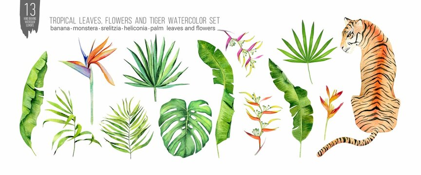 Watercolor tiger, tropical leaves and flowers set. Colorfull set for design textile, wallpapers, prints and banners.