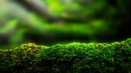 closeup or macro beautiful moss in forest background
