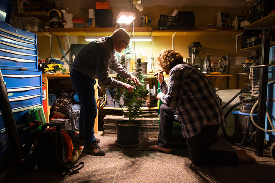 Father and son looking at cannabis plant under bright light