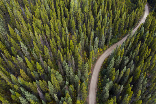 Aerial view of road winding through forest