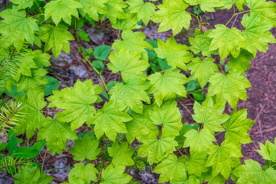 Cluster of bright green leaves