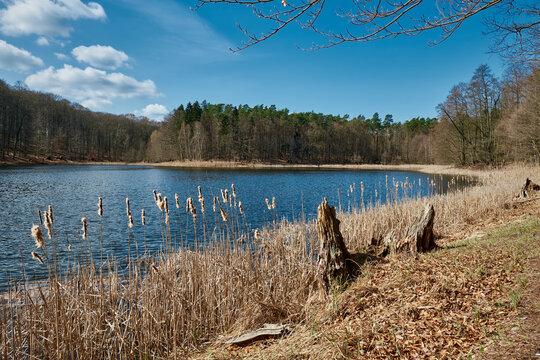 "Vorfrühling am Buckow-See im Naturschutzgebiet ""Grumsiner Forst"", Teil des UNESCO-Weltnaturerbes"