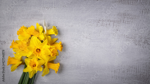 Amazing background with Yellow daffodils flowers on grey texture. Beautiful Greeting Card for Mother's Day, Easter, Women's day. Copy Space for text