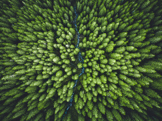 Fototapeta Aerial top view of  green trees in forest in Slovakia. Drone photography. Rainforest ecosystem and healthy environment concept