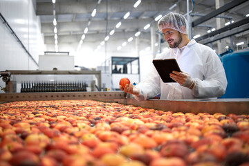 Technologist in food processing factory controlling process of apple fruit selection and production.